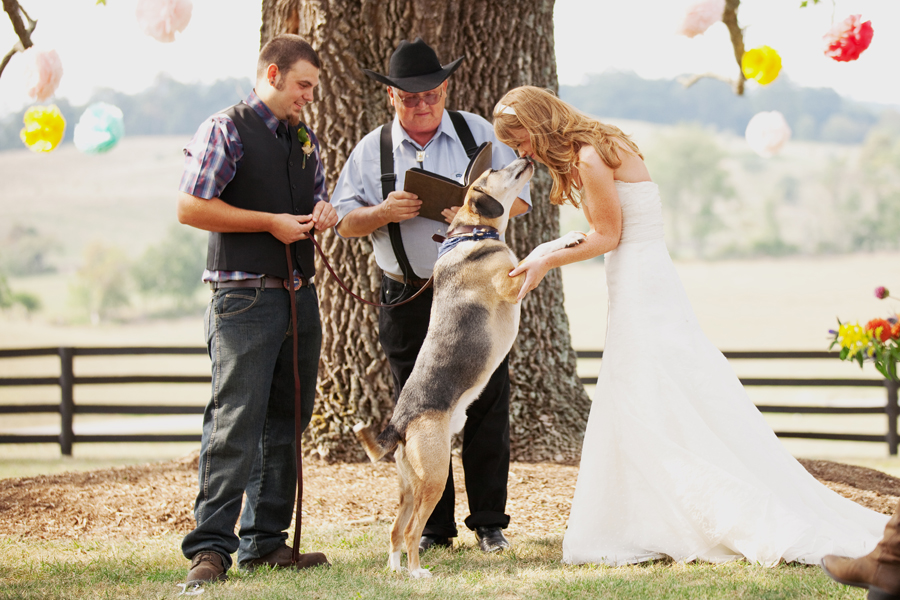 Cachorro em casamento ao ar livre