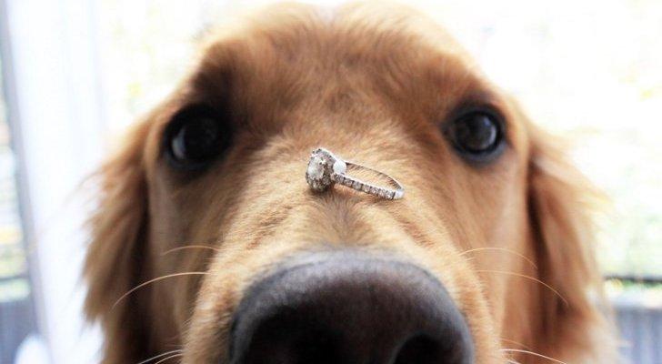 Cachorro levando a aliança no focinho
