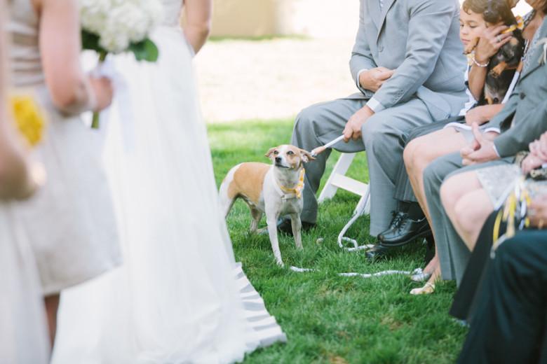 Pessoa cuidando do cachorro no casamento