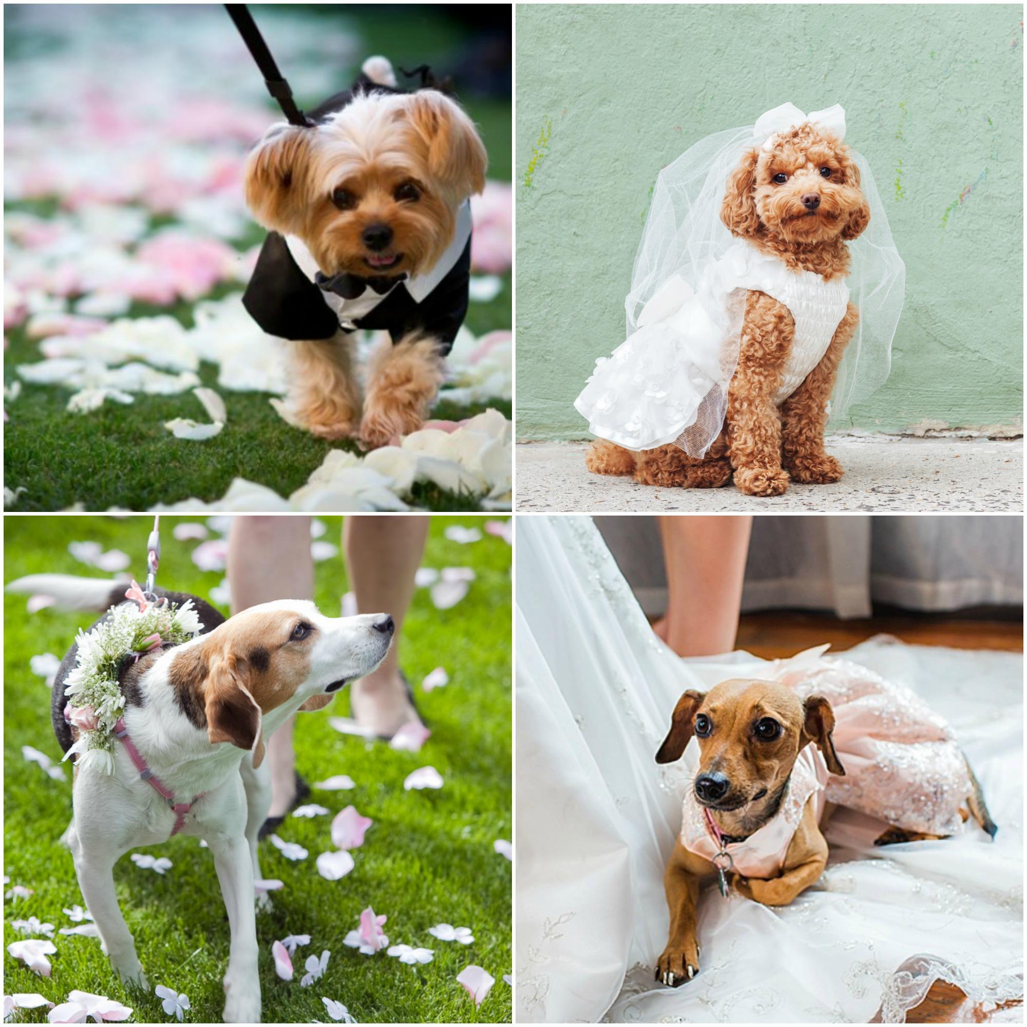 Ideias de trajes para cachorros em casamento