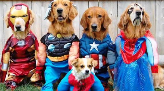 Temas de eventos incríveis: festa para pets